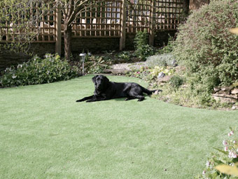 Dog_on_artificial_grass