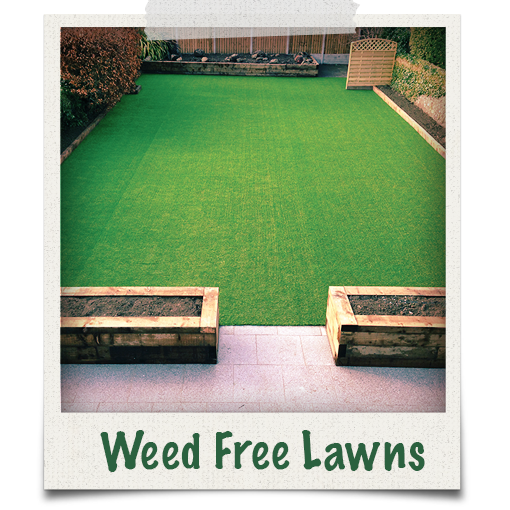Our garden grass lawns are weed free and low maintenance
