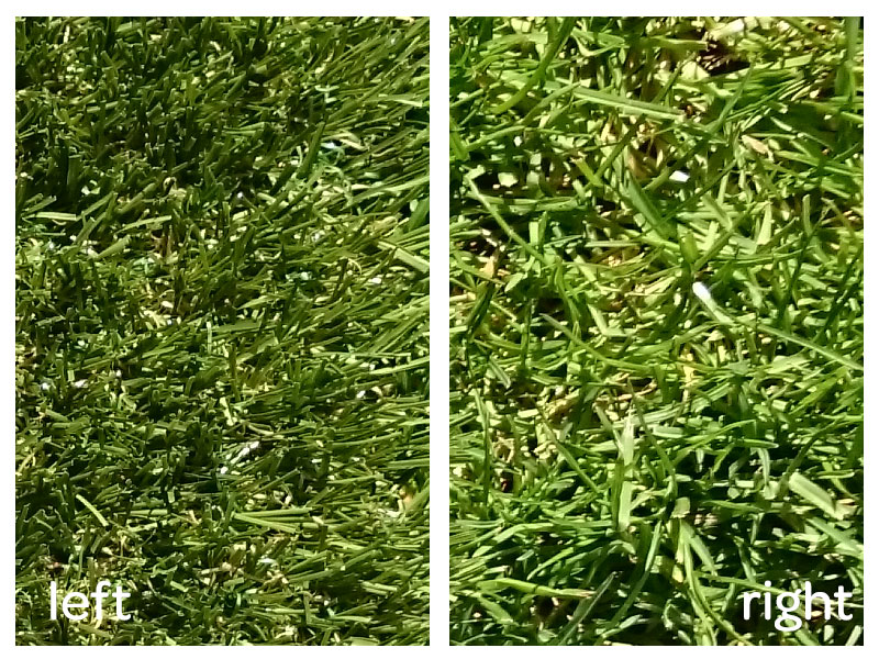 Which is real grass?