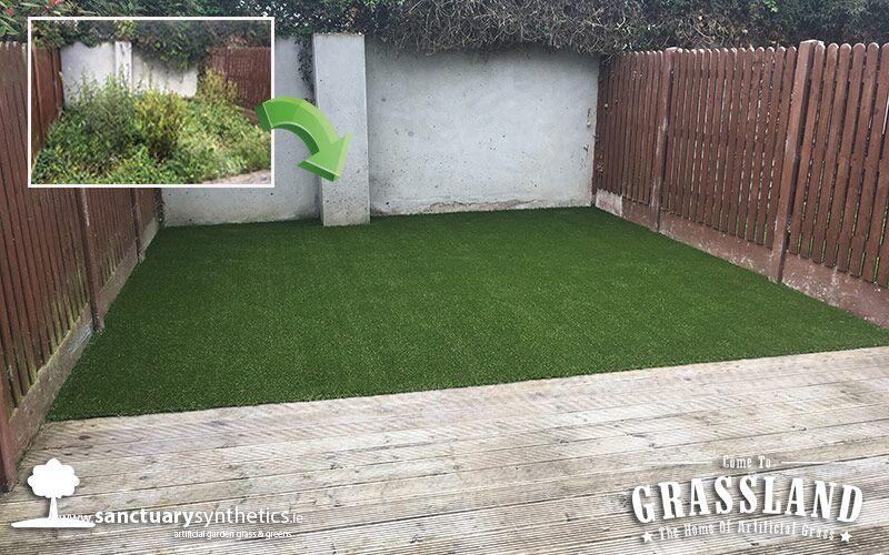 Weed Ridden Dublin Garden