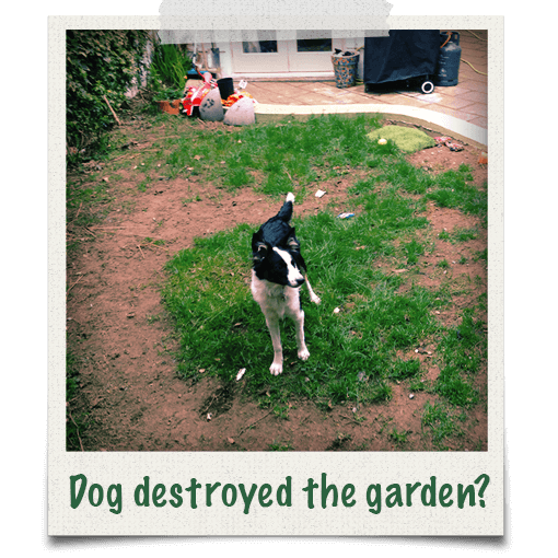 Has your dog destroyed the garden grass