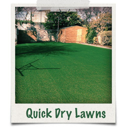 Our garden grass is quickly dry after rain